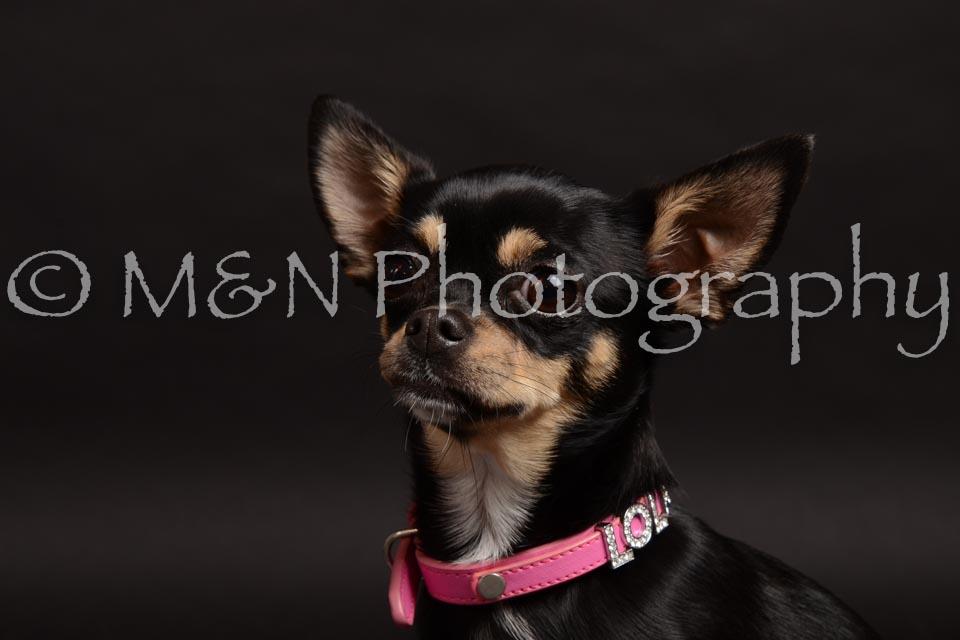 M&N Photography -DSC_0121
