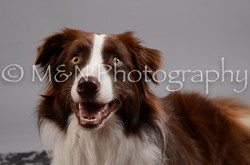 M&N Photography -DSC_2740