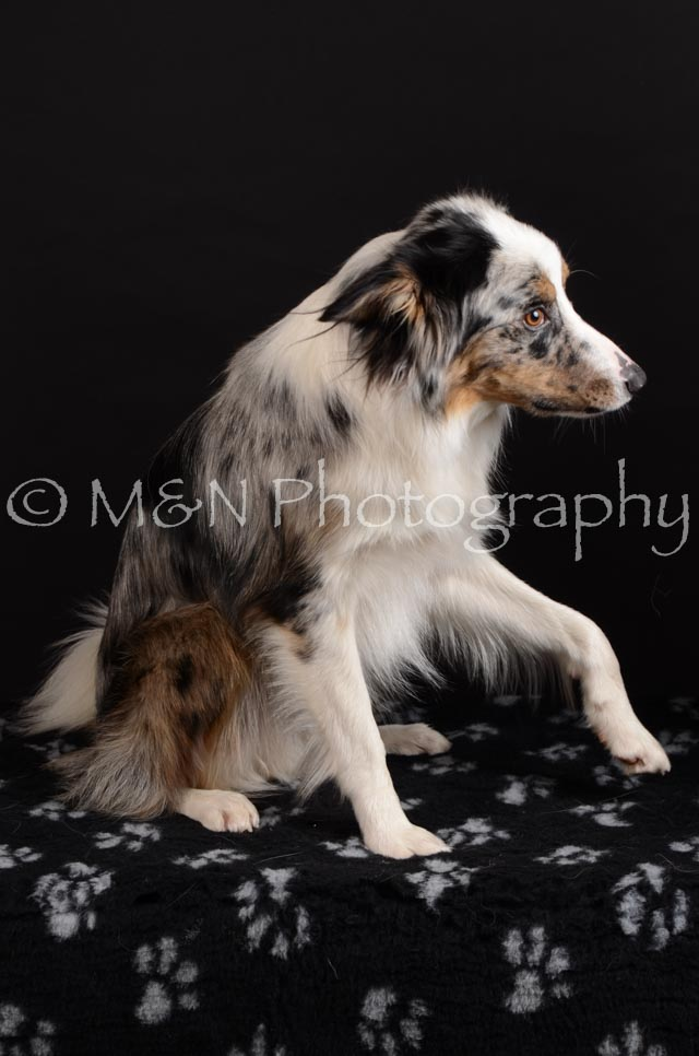 M&N Photography -DSC_5411
