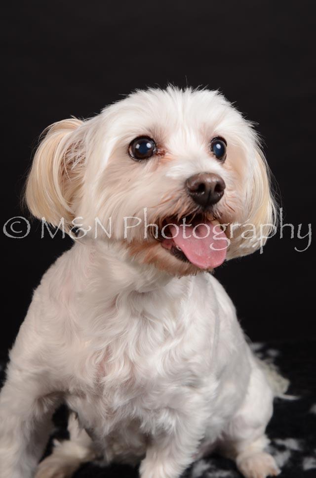 M&N Photography -DSC_5781