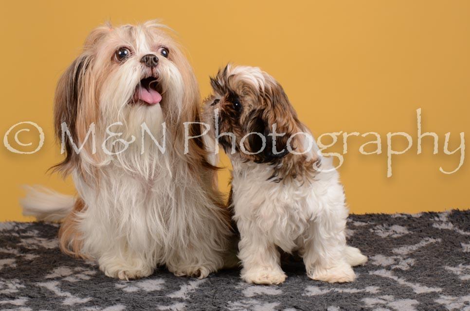 M&N Photography -DSC_4564