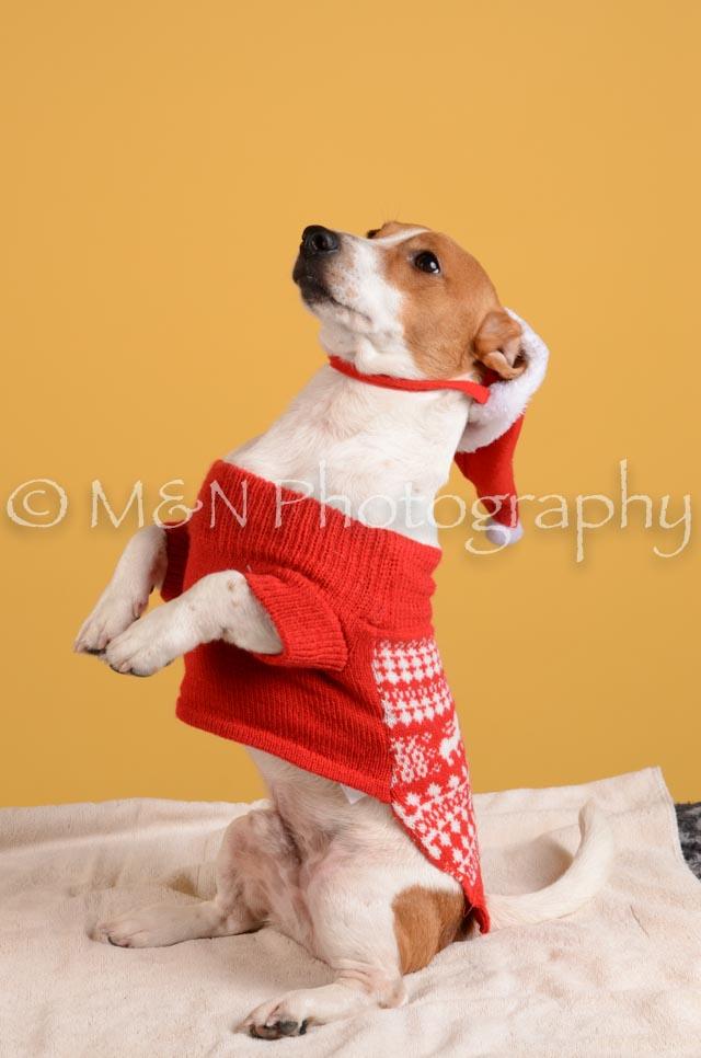 M&N Photography -DSC_4866