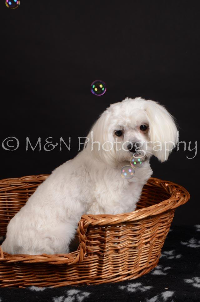 M&N Photography -DSC_5533