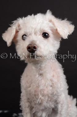 M&N Photography -DSC_5389