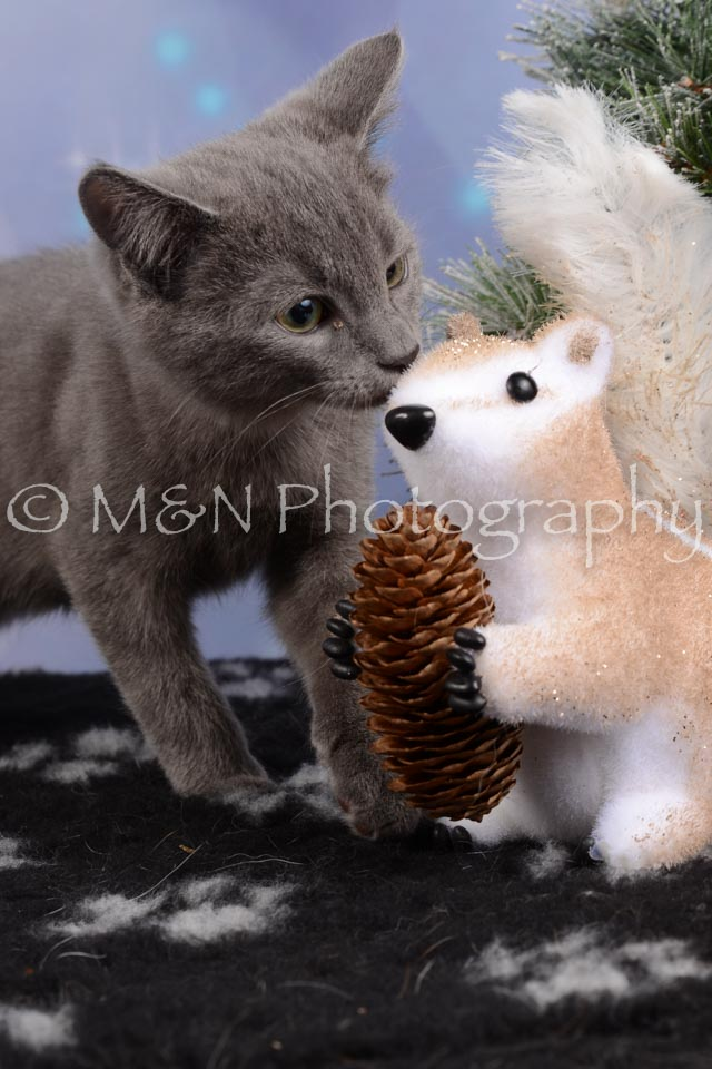 M&N Photography -DSC_6540