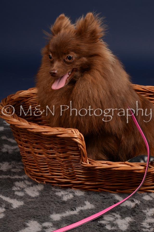 M&N Photography -DSC_0442