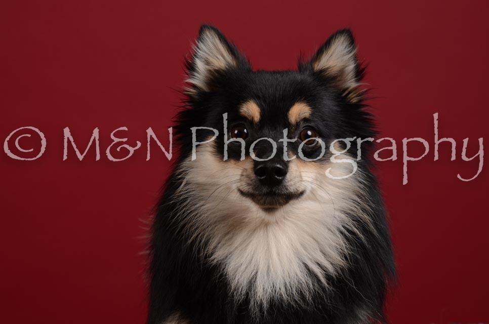 M&N Photography -DSC_3210