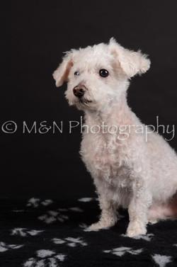 M&N Photography -DSC_5383