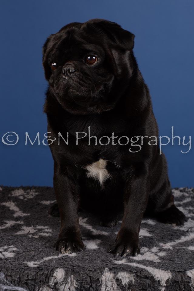 M&N Photography -DSC_5071