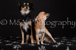 M&N Photography -DSC_5749