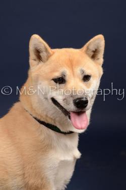 M&N Photography -DSC_0656