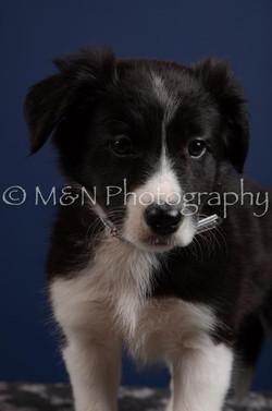 M&N Photography -DSC_3971