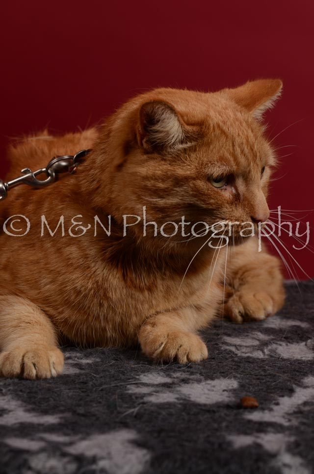 M&N Photography -DSC_3436