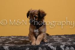 M&N Photography -DSC_4730