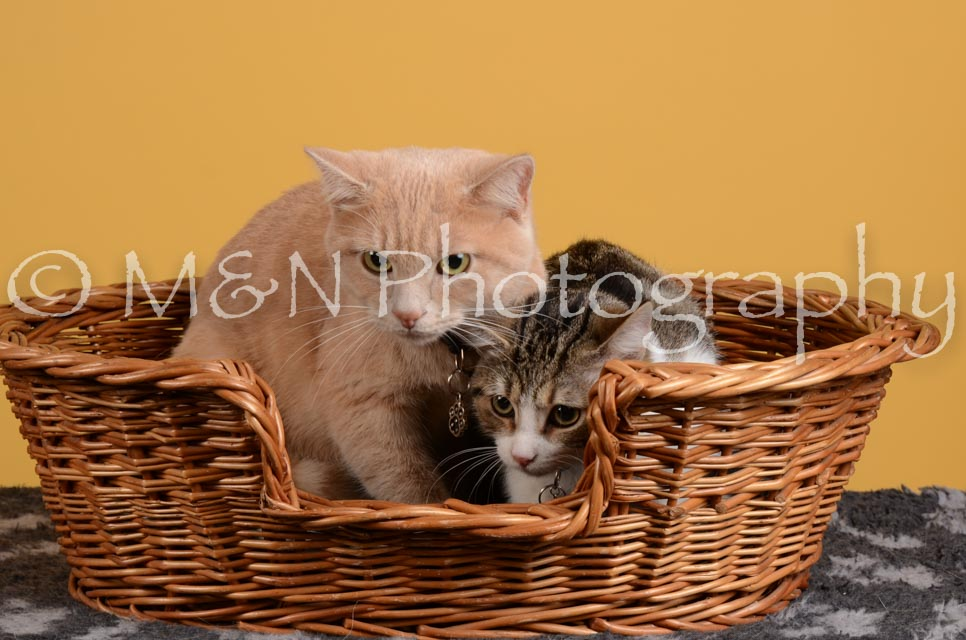 M&N Photography -DSC_4806