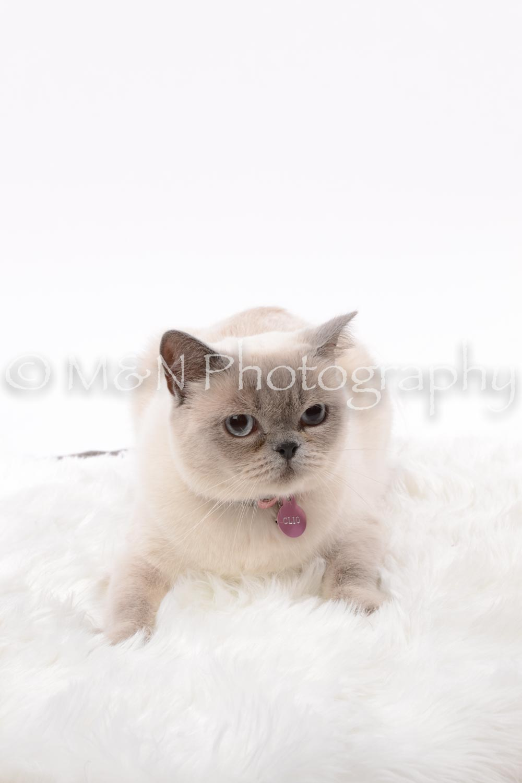 M&N Photography -DSC_8792