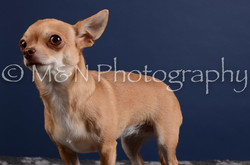 M&N Photography -DSC_4105