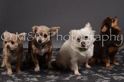 M&N Photography -DSC_2245