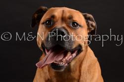 M&N Photography -DSC_0186