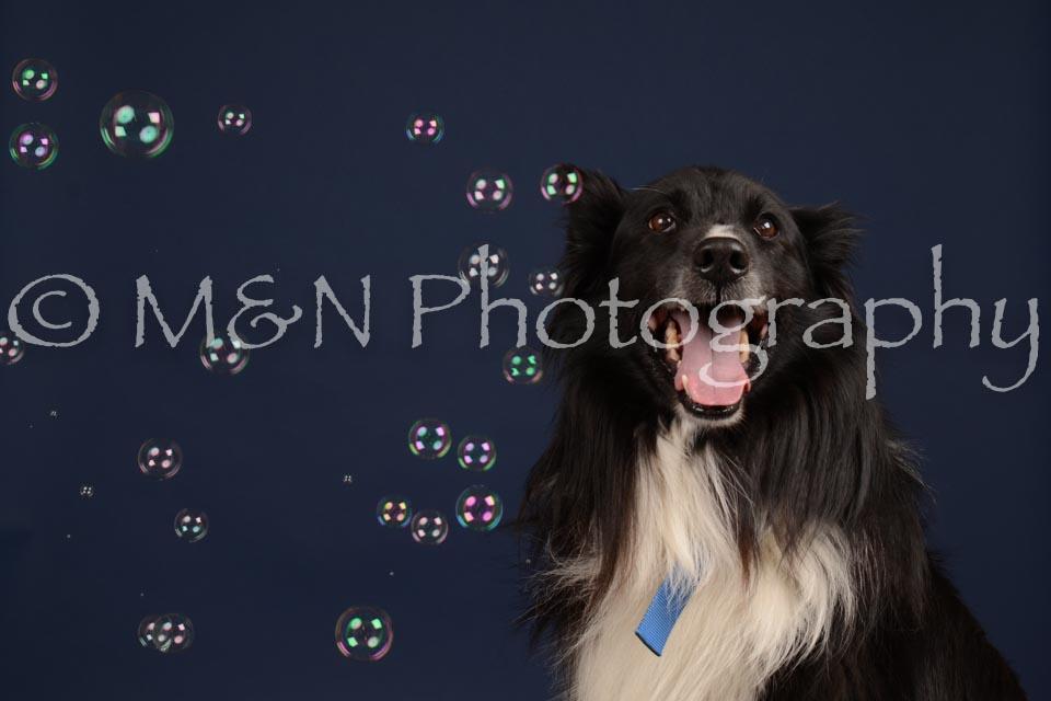 M&N Photography -DSC_0697