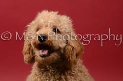 M&N Photography -DSC_6694
