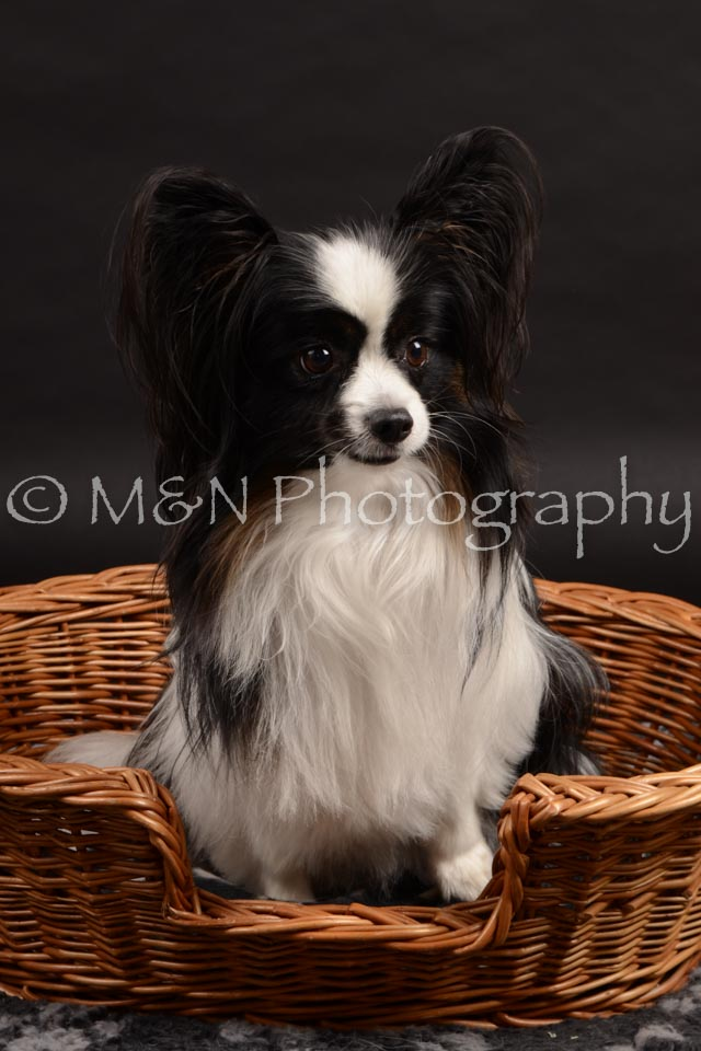 M&N Photography -DSC_9820