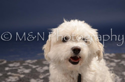 M&N Photography -DSC_0576