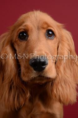 M&N Photography -DSC_3672