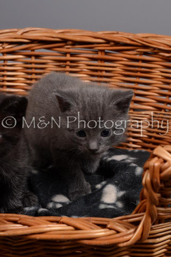 M&N Photography -DSC_2373
