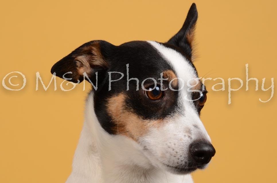 M&N Photography -DSC_4519