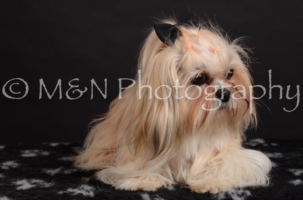M&N Photography -DSC_5720
