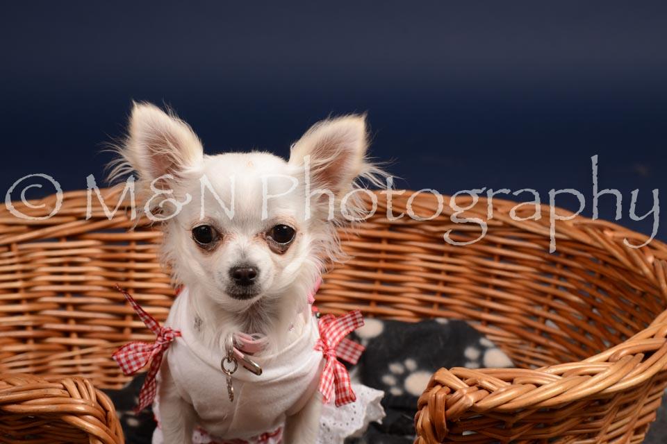 M&N Photography -DSC_0453