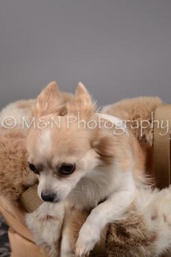 M&N Photography -DSC_1648