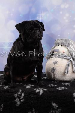 M&N Photography -DSC_6604