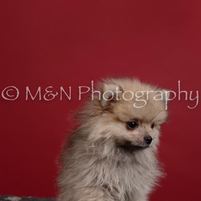 M&N Photography -DSC_3414-2