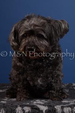 M&N Photography -DSC_5040