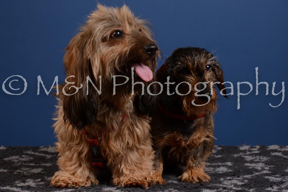 M&N Photography -DSC_5258