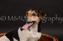 M&N Photography -DSC_0050