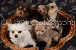 M&N Photography -DSC_2250