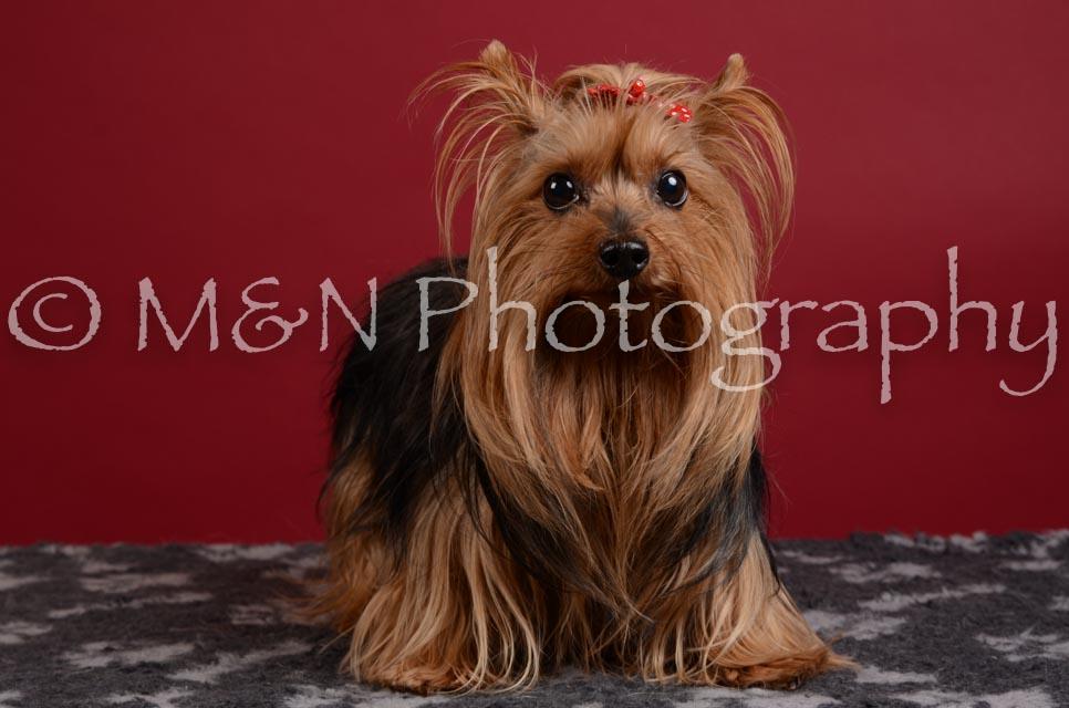M&N Photography -DSC_3621