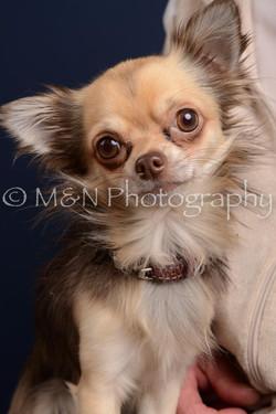 M&N Photography -DSC_4309
