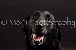 M&N Photography -DSC_0067