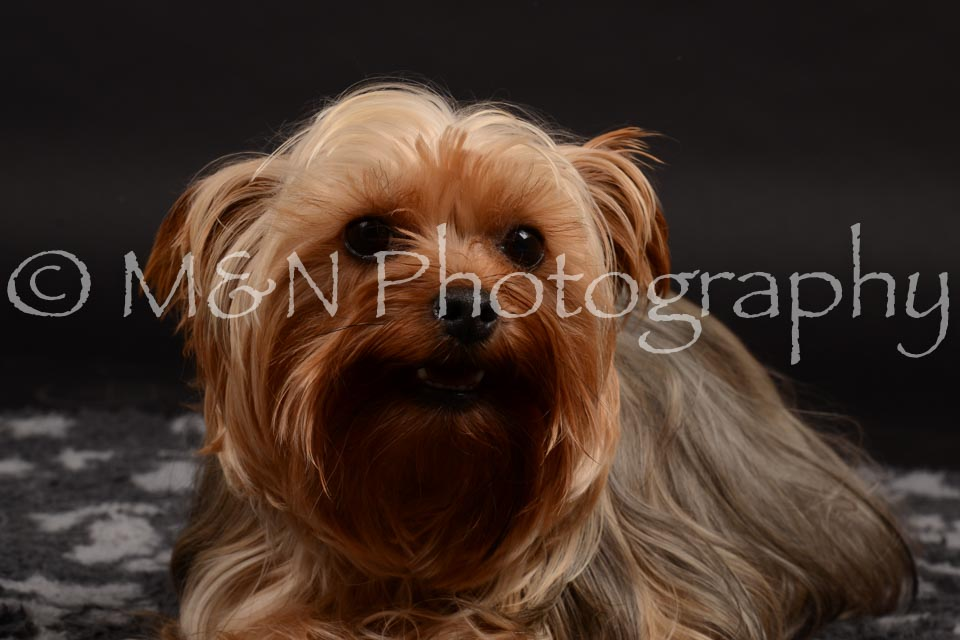 M&N Photography -DSC_9706