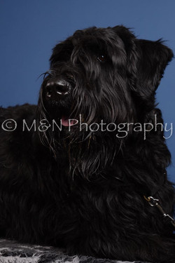 M&N Photography -DSC_4978