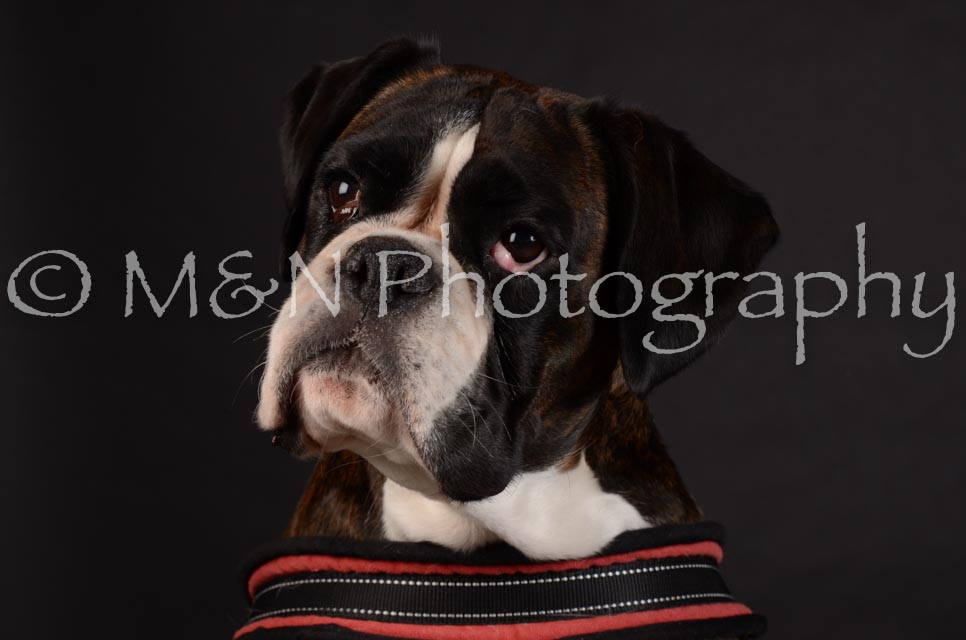 M&N Photography -DSC_5634