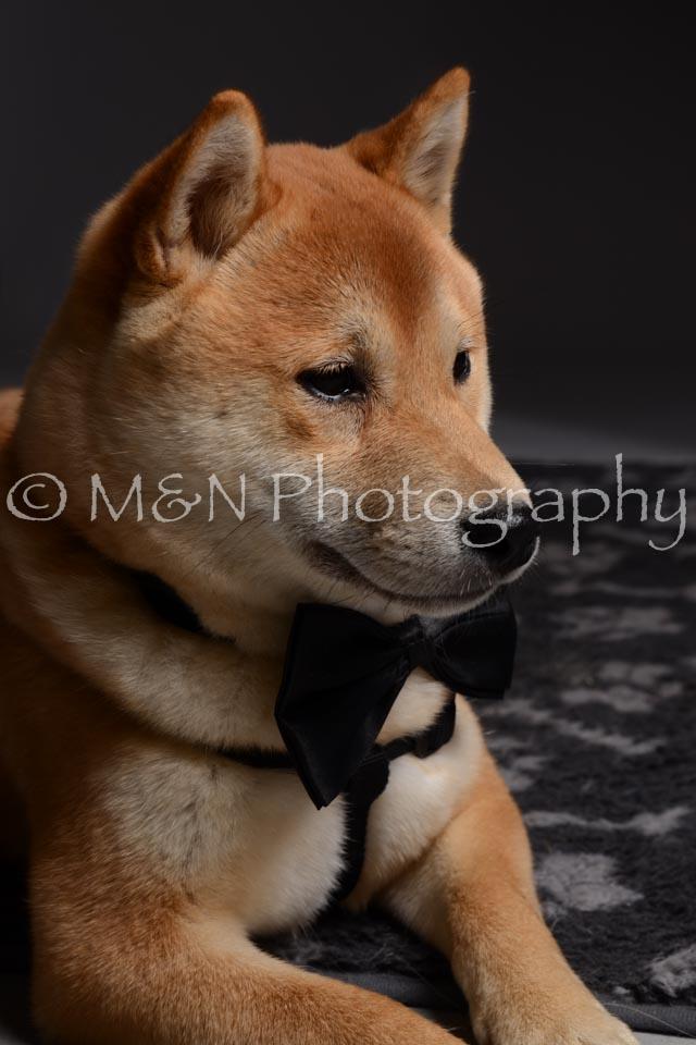 M&N Photography -DSC_2153