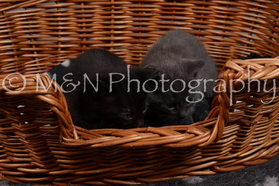 M&N Photography -DSC_2362