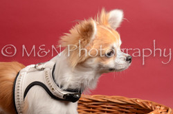 M&N Photography -DSC_8607