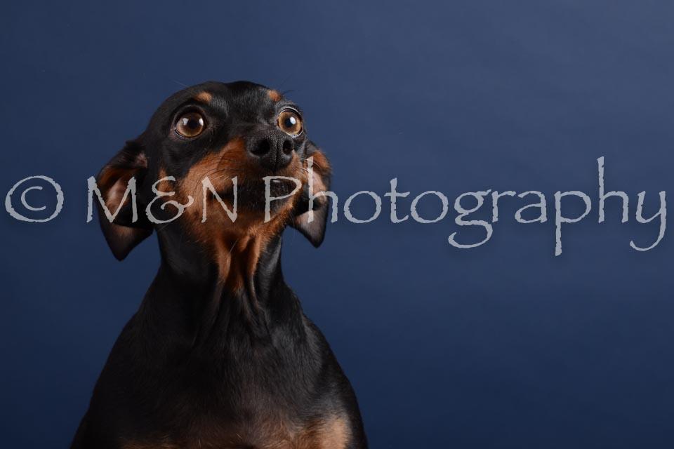M&N Photography -DSC_3819