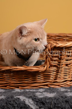 M&N Photography -DSC_4794